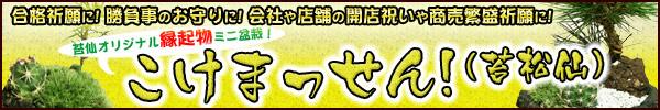 お祝い・ギフト・合格祈願・商売繁盛祈願・お守りに、オリジナル縁起ミニ盆栽「こけまっせん!(苔松仙)」