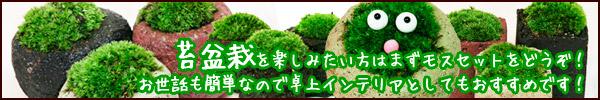 苔盆栽のモスセット通販